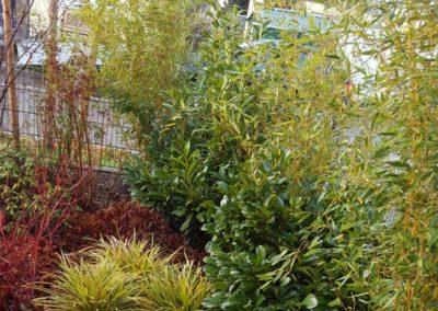 Gartenbau Bambus